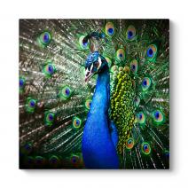 Tavus Kuşu Tablosu