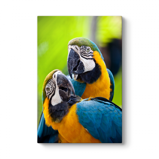 Renkli Papağanlar Tablosu