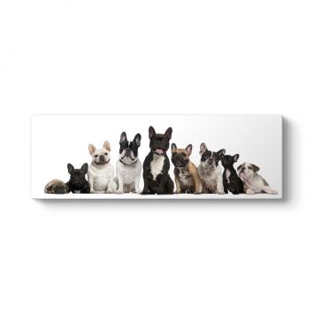 Fransız Bulldog Ailesi Tablosu