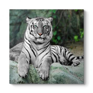 Bengal Kaplanı Tablosu