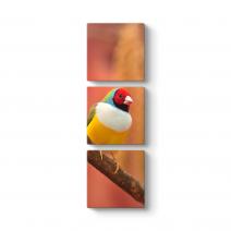 Saka Kuşu Tablosu