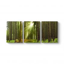 Çam Ağaçları Tablosu
