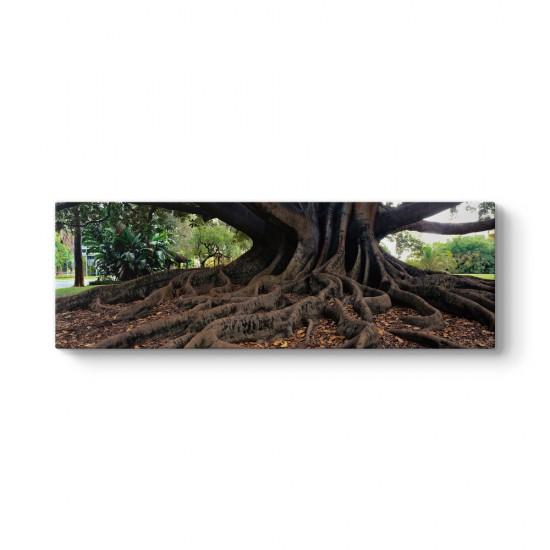 Yaşlı Ağaç Tablosu