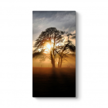 Ağaç ve Güneş Tablosu