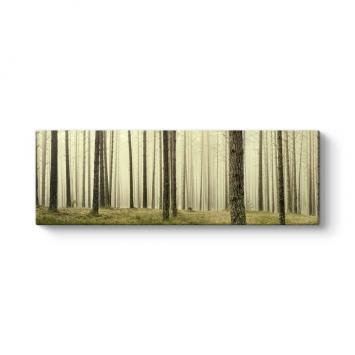 Ağaçlar Panorama Tablo