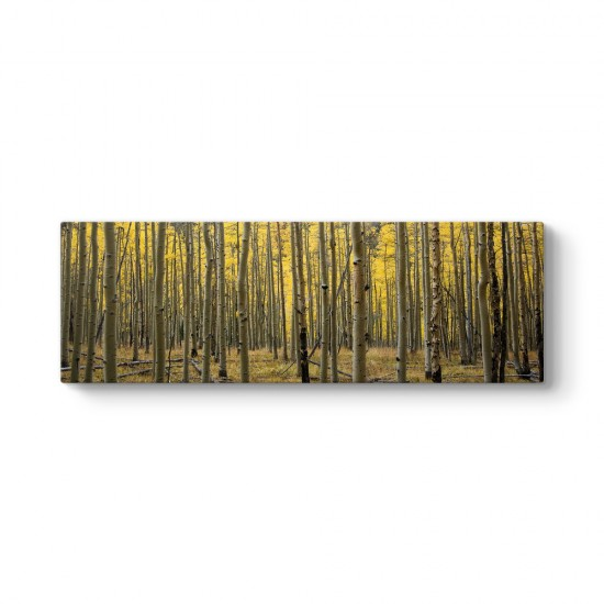 Kuru Ağaçlar Tablosu