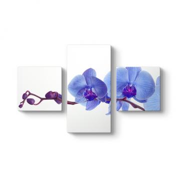 Mor Orkide 3 Parçalı Tablo