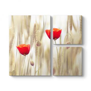 Simple Poppy 3 Parçalı Tablo