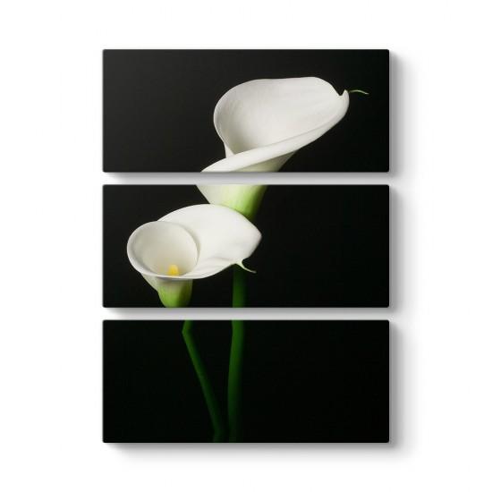 Beyaz Zambak 3 Parçalı Tablo