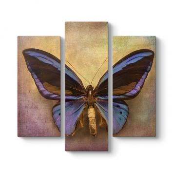 Kurutulmuş Kelebek 3 Parçalı Tablo