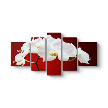 Beyaz Orkide 5 Parçalı Tablo
