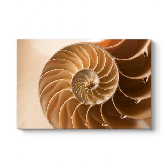 Spiral Tablosu