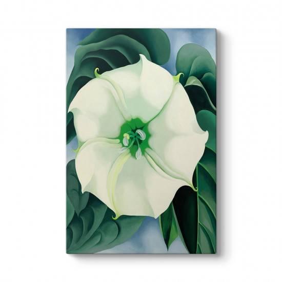 Georgia OKeeffe - White Flower Tablosu