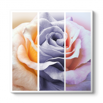Style Rose Tablosu