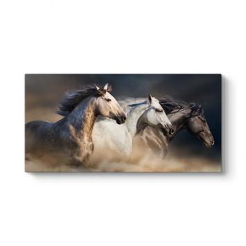 Koşan Arap Atları Tablosu