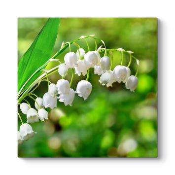 Müge Çiçeği Tablosu