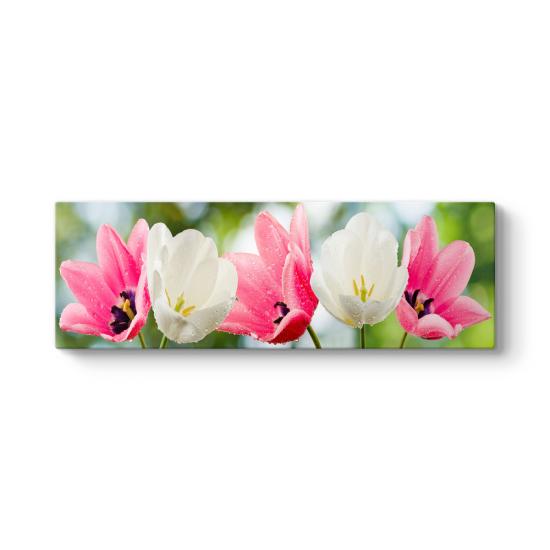 Islak Pembe Beyaz Çiçekler Tablosu