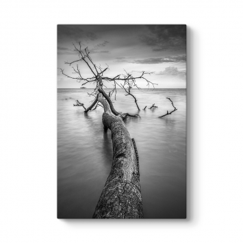 Yıkılmış Ağaç Tablosu