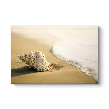 Sahile Vurmuş Deniz Kabuğu Tablosu