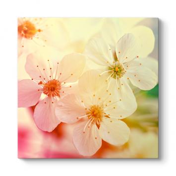 Elma Çiçeği Tablosu
