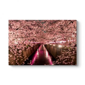 Kiraz Çiçeği Kanalı Tablosu