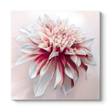 Vektörel Yıldız Çiçeği Tablosu