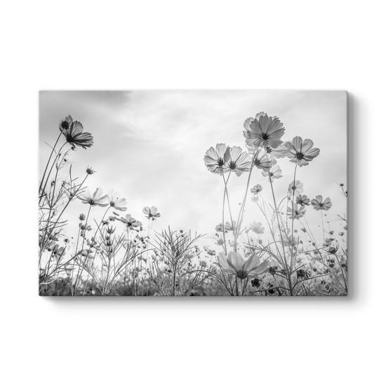 Cosmos Çiçeği Kanvas Tablo