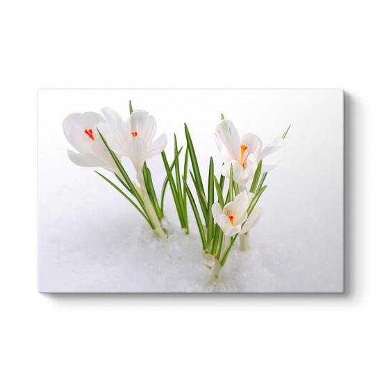 Kardelen Çiçeği Kanvas Tablo
