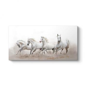 Panorama Beyaz Koşan Atlar