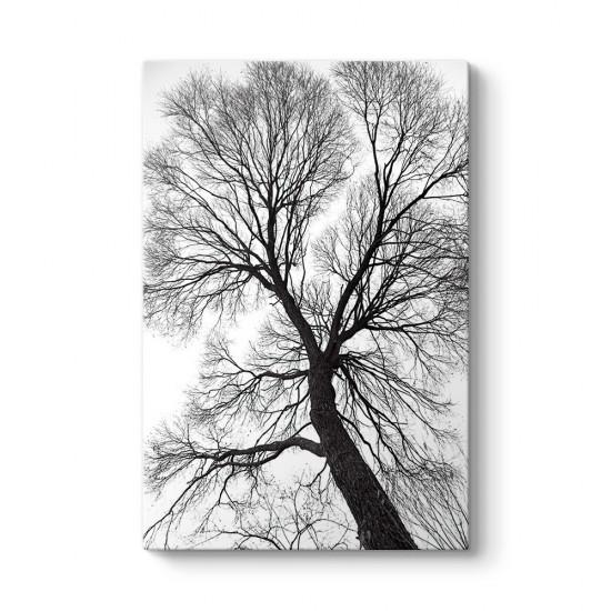 Yaşlı Ağaç Dalları Kanvas Tablo