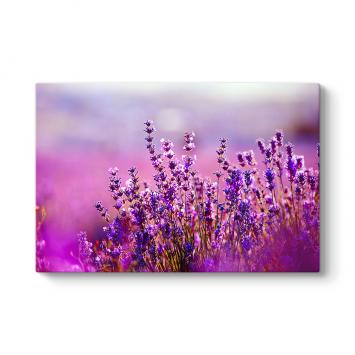 Lavanta Çiçekleri Kanvas Tablo