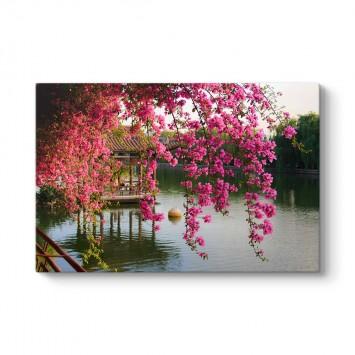 Pembe Bahar Çiçekleri Çin