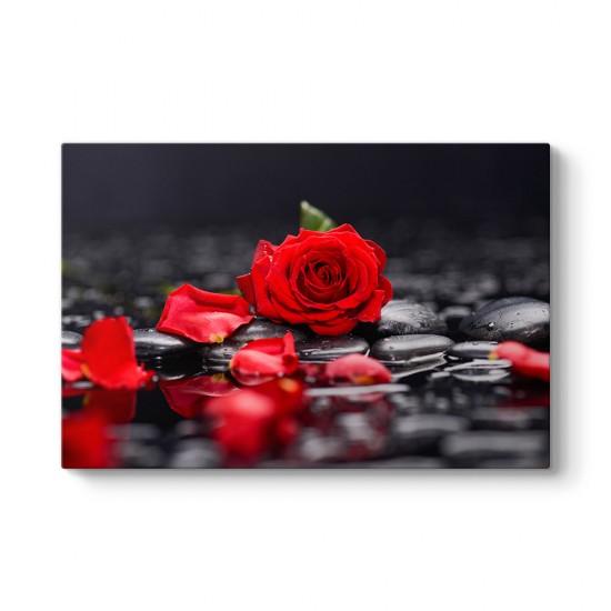 Kırmızı Gül ve Yaprakları Tablosu