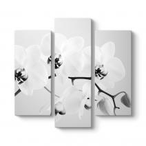Siyah Beyaz Orkide Tablosu