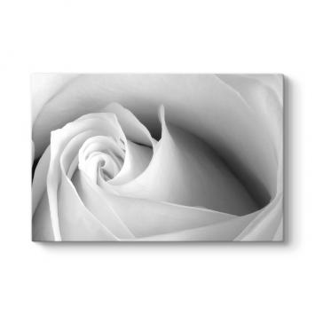 White Rose Tablosu