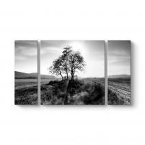 Ağaç Siyah Beyaz Tablo
