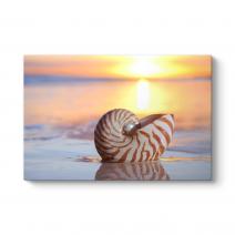 Deniz Kıyısında Deniz Kabuğu Tablosu