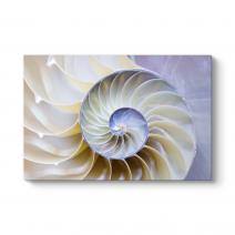 Beyaz Deniz Kabuğu Tablosu