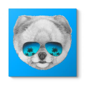 Pomeranian Boo Tablosu