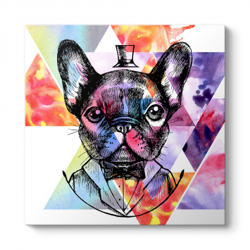 King French Bulldog