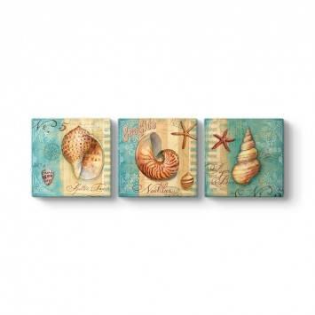 Deniz Kabukları Duvar Tablosu