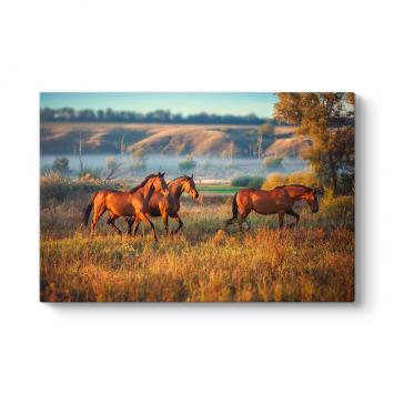 Yabani At Sürüsü Tablosu
