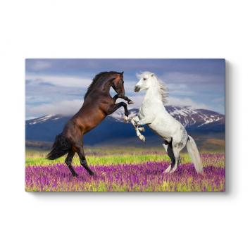 Şahlanan Atlar Tablosu