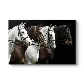 Sıralı Atlar Tablo