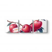 Elma Çizim Tablosu